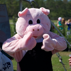 Our pig entertains the crowds